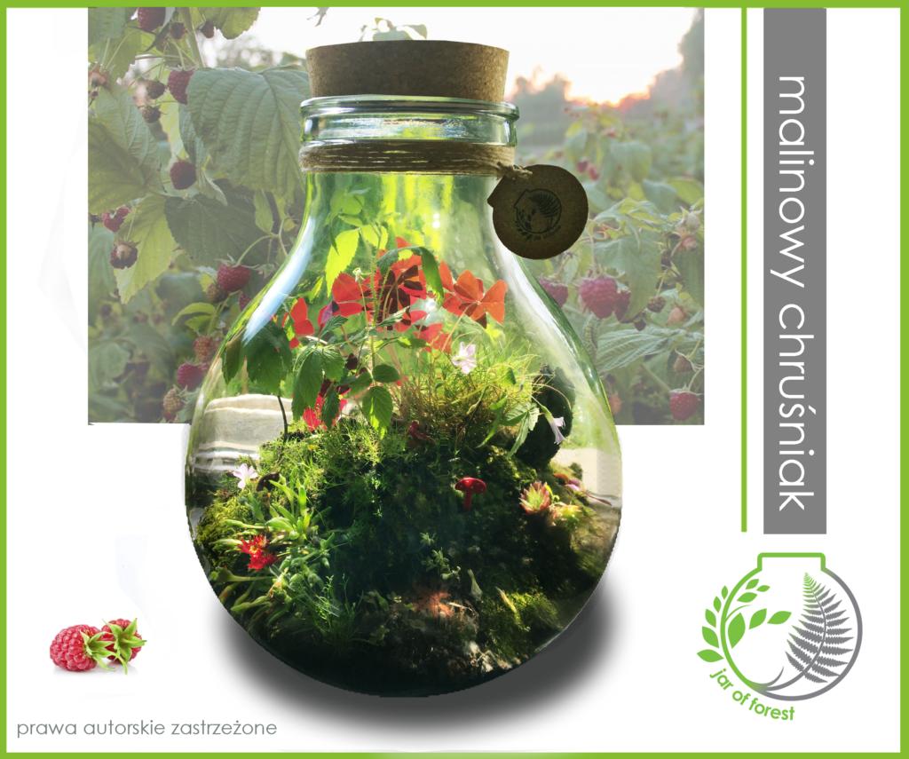 0026 Jar-of-Forest-malinowy-chrusniak-15litrow-40cm-350zl