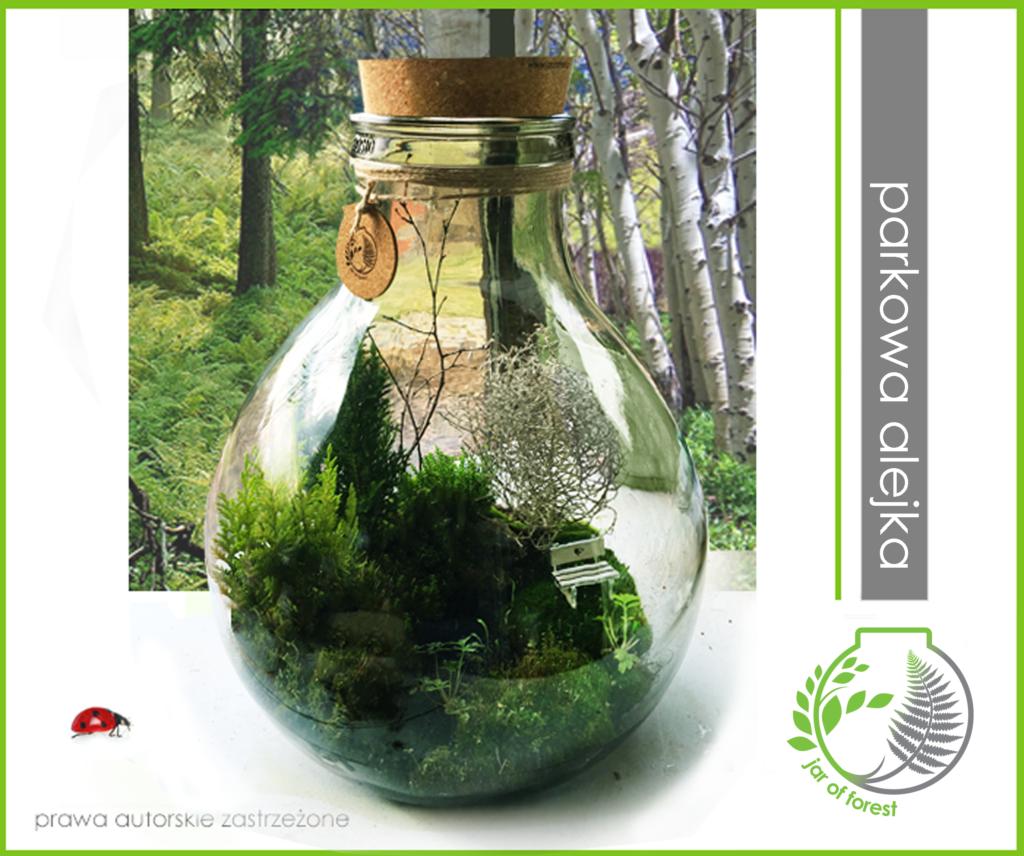 0030-Jar-of-forest-parkowa-alejka-25litrow-50cm-450zl