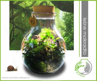 0032-Jar-of-forest-lesne-mokradlo-15litrow-40cm-350zl
